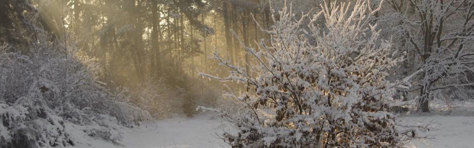 http://www.fotografie.laurenvermue.nl